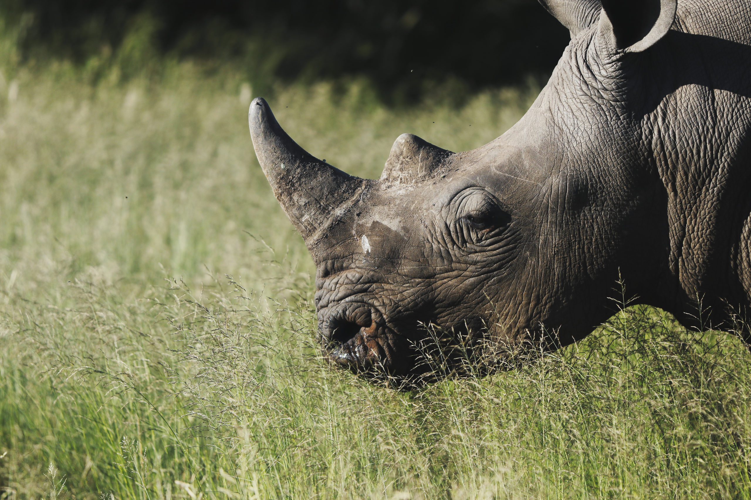 AFRICA'S TREASURES PART 3: AFRICA'S MOST ENDANGERED
