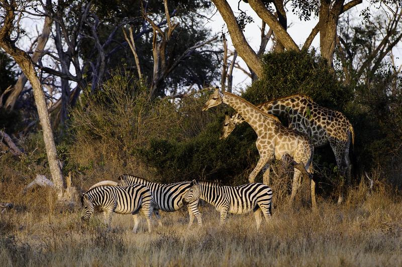 AFRICA'S TREASURES PART 4: AFRICA'S BEST FRIENDS