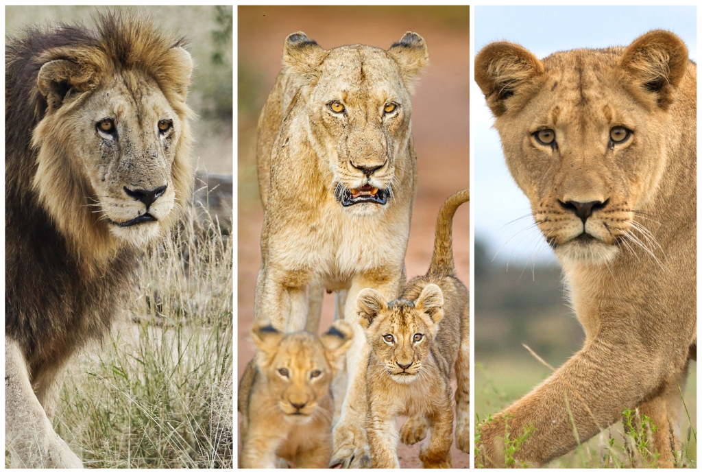 #WORLDLIONDAY Part 3: Up Close & Personal – Guides, Photographers & Filmmakers